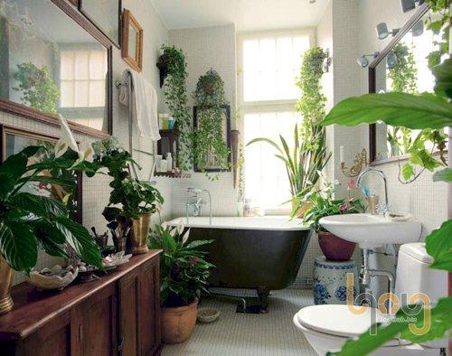 Trồng cây xanh trong nhà và những ý nghĩa to lớn