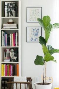 Trồng cây xanh trong phòng khách